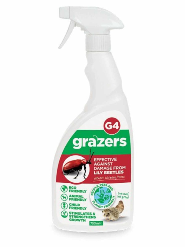 Grazers G4 Lily Beetles