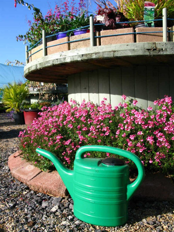 Watering Can 10 litre