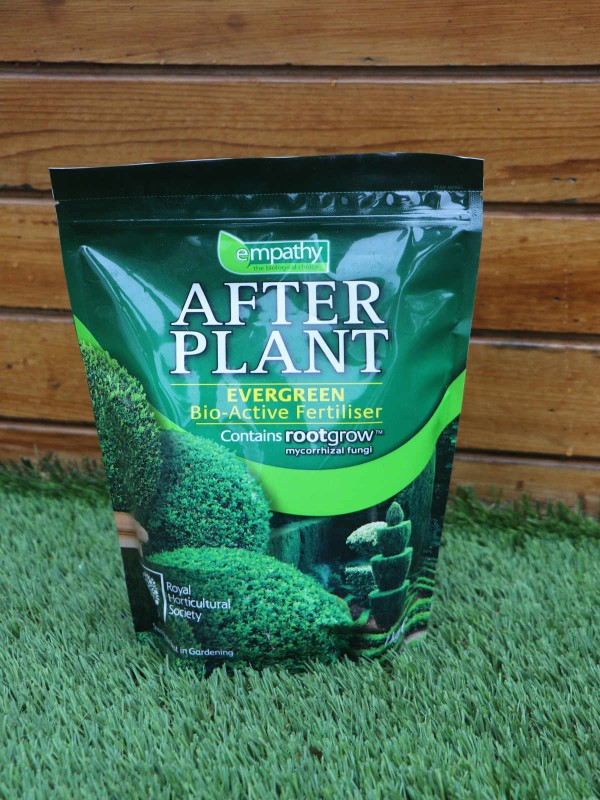 Afterplant Evergreen